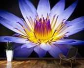 Colourful Waterlily mural wallpaper kitchen preview