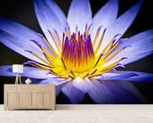 Colourful Waterlily mural wallpaper living room preview