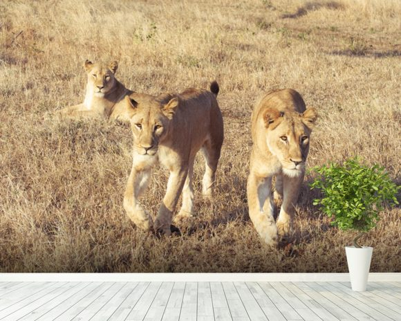 Curious lion cubs wall mural room setting
