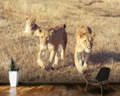 Curious lion cubs wall mural kitchen preview