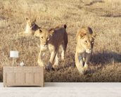 Curious lion cubs wall mural living room preview