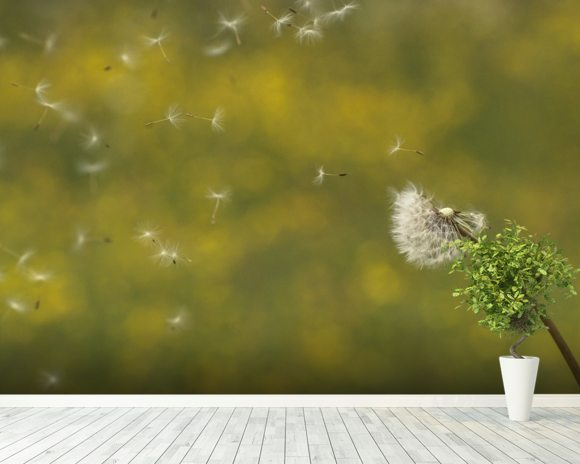 Dandelion in the Wind - Colour wallpaper mural room setting