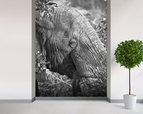 Old elephant nick jackson wall mural wallsauce for Elephant wall mural