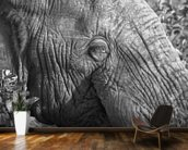 Old elephant mural wallpaper kitchen preview