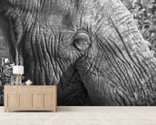 Old elephant mural wallpaper living room preview