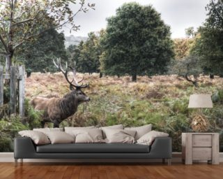 Richmond Park Stag Wallpaper Mural Wall Murals Wallpaper