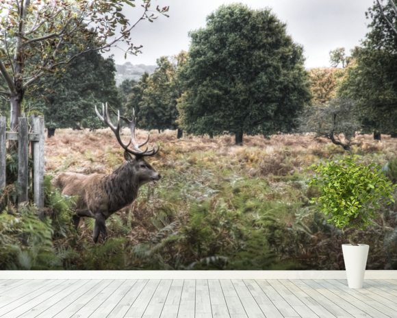 Richmond Park Stag wall mural room setting