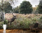 Richmond Park Stag wall mural kitchen preview