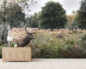 Richmond Park Stag wall mural living room preview