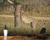 Stretching Cheetah wall mural kitchen preview