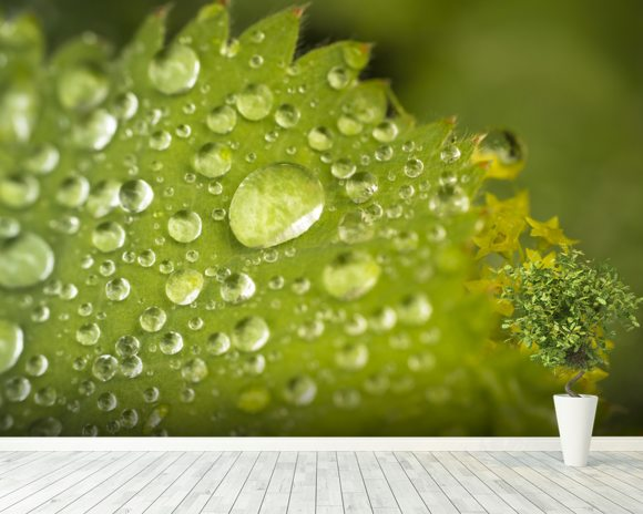 Water droplets on a leaf wall mural room setting
