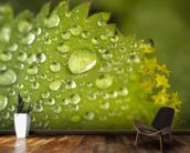 Water droplets on a leaf wall mural kitchen preview