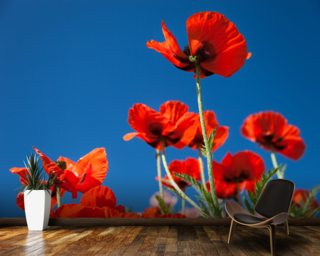 Red Poppies Wall Mural Wallpaper Wall Murals