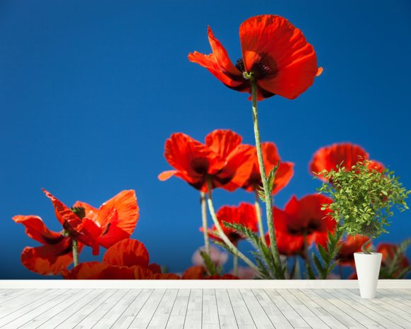 Red Poppies mural wallpaper room setting