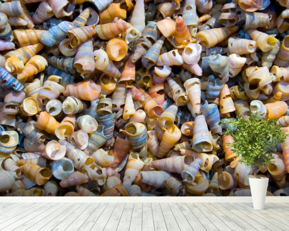 Tower Shells wall mural room setting