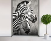 Zebra family wall mural in-room view