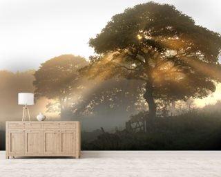 Bretton Dawn mural wallpaper