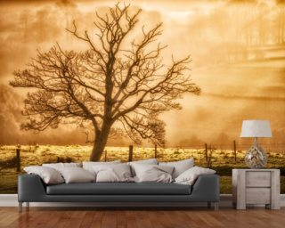Tree Dawn wallpaper mural