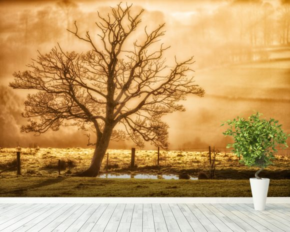 Tree Dawn wallpaper mural room setting