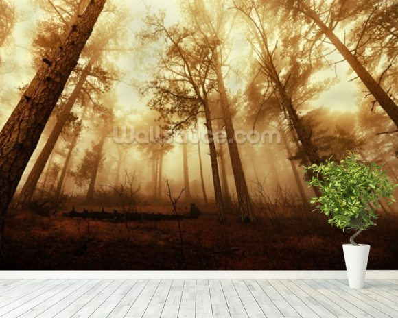 Pine Forest in the Mist mural wallpaper room setting