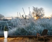 Frozen Grass in Richmond Park wall mural kitchen preview
