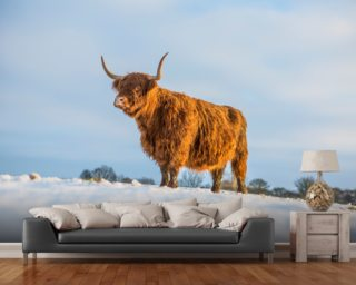 Highland Cow Wall Murals Wallpaper