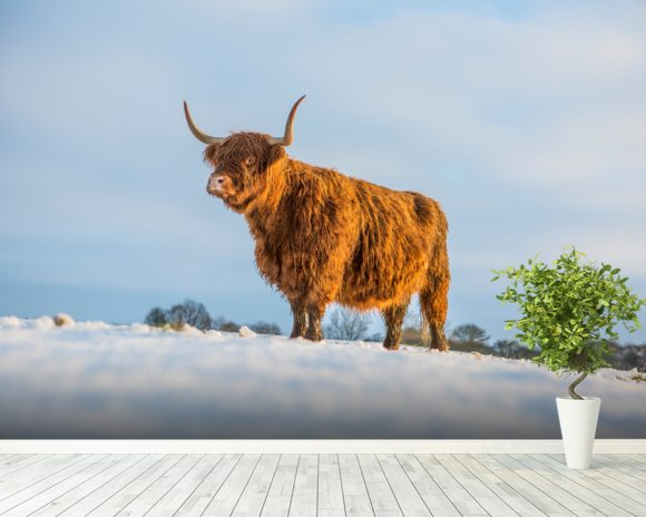 Highland Cow wallpaper mural room setting