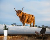 Highland Cow wallpaper mural kitchen preview
