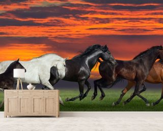 Sunset Horses wallpaper mural