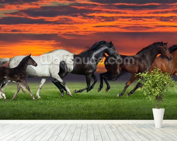Sunset Horses wallpaper mural room setting