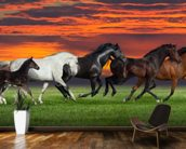 Sunset Horses wallpaper mural kitchen preview