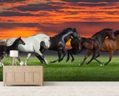 Sunset Horses wallpaper mural living room preview