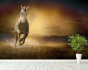 White Horse at Gallop wall mural in-room view