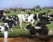 Holstein Cattle wall mural kitchen preview