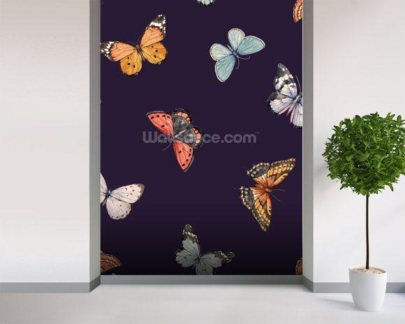 Dark Background Butterfly Wallpaper Wallsauce New Zealand