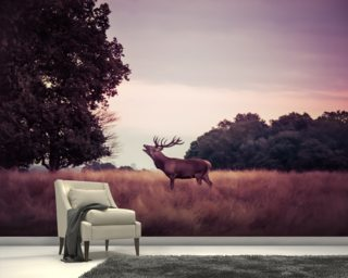 Stag at Sunrise wallpaper mural