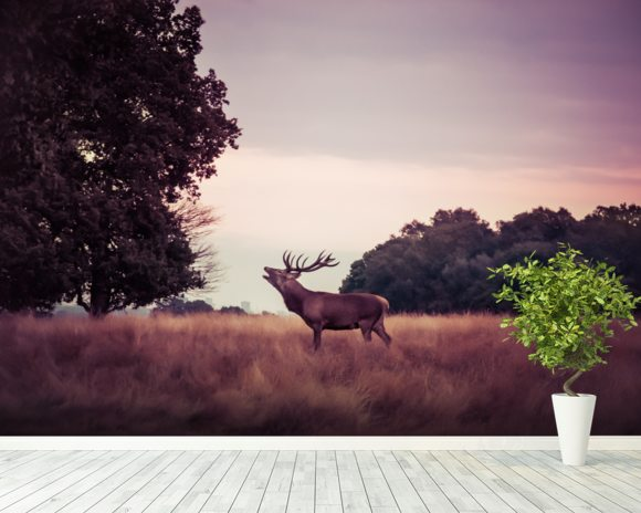 Stag at Sunrise wallpaper mural room setting