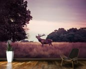 Stag at Sunrise wallpaper mural kitchen preview