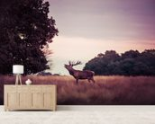 Stag at Sunrise wallpaper mural living room preview