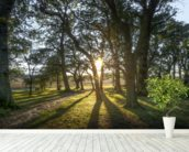 New Forest Sunset wall mural in-room view