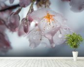 Raindrops on Cherry Blossom wallpaper mural in-room view
