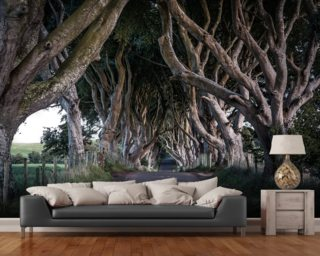 The Dark Hedges of County Antrim Wallpaper Wall Murals