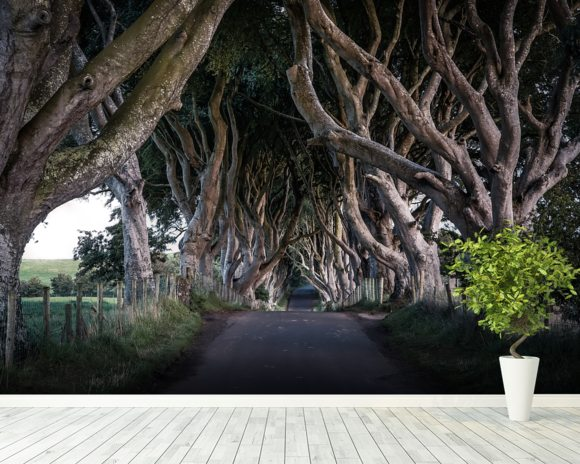 The Dark Hedges of County Antrim wall mural room setting
