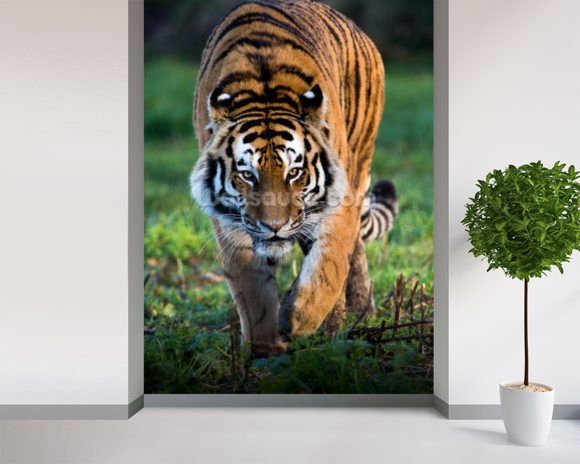 Siberian Tiger wallpaper mural room setting