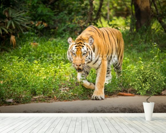 Tiger Prowls mural wallpaper room setting