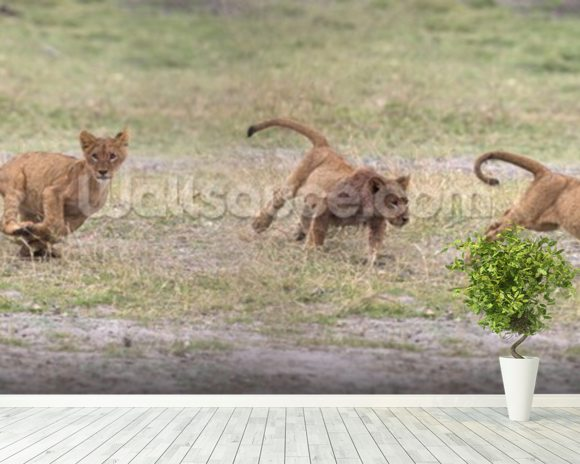 Lion Cubs wall mural room setting