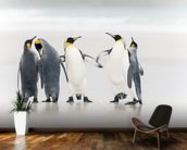 King Penguins mural wallpaper kitchen preview