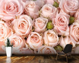 Bright Pink Roses Wallpaper Wall Murals