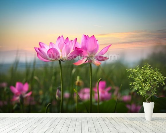 Lotus Flower in Sunset mural wallpaper room setting