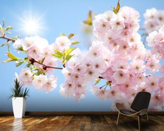 Sunlit Blossom Wall Mural Part 21